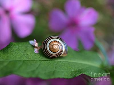 Photograph - Come Out Of Your Shell by Susan Dimitrakopoulos
