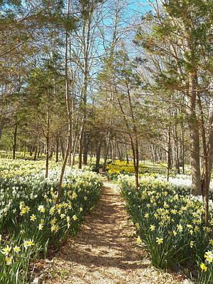 Come Walk Among The Daffodils Art Print