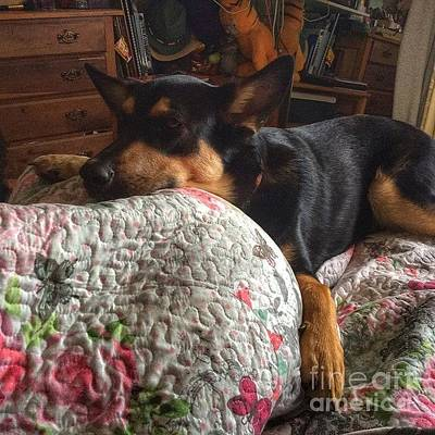 Dog Photograph - Comfort. #dogs #gsd #germanshepherd by Isabella F Abbie Shores FRSA