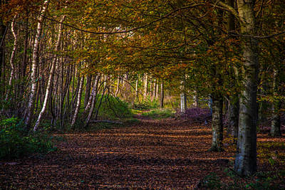 Art Print featuring the photograph Comfort In These Woods by Odd Jeppesen