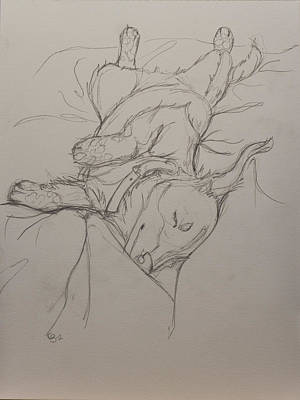 Dachshund Puppy Drawing - Comfortable by Carissa Sorensen