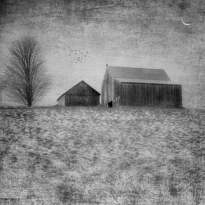 Coming Home To Roost Bw Art Print