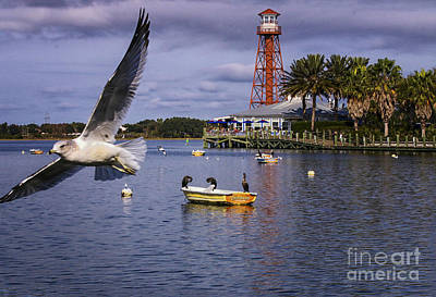 Photograph - Coming In For A Landing  by Mary Lou Chmura