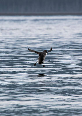 Photograph - Coming In For A Landing by Gloria Anderson