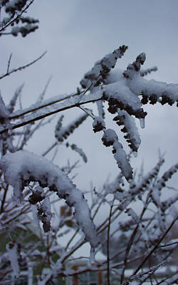 Photograph - Coming Soon Snowfall by Roberta Byram