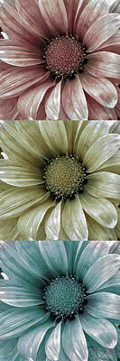 Daisies Photograph - Coming Up Daisies 2 by Angelina Vick