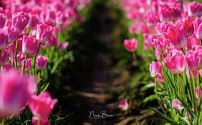 Photograph - Coming Up Pink by Nick Boren