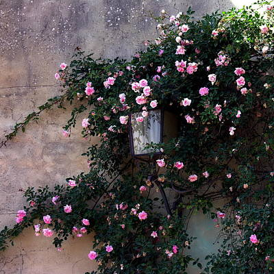 Photograph - Coming Up Roses by Jacqueline M Lewis