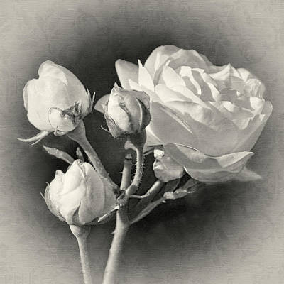 Photograph - Coming Up Roses by Leda Robertson