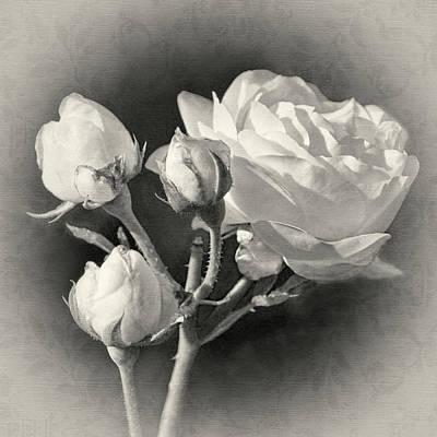 Photograph - Coming Up Roses by Leda Robertson