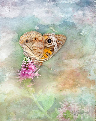 Photograph - Common Buckeye by Betty LaRue