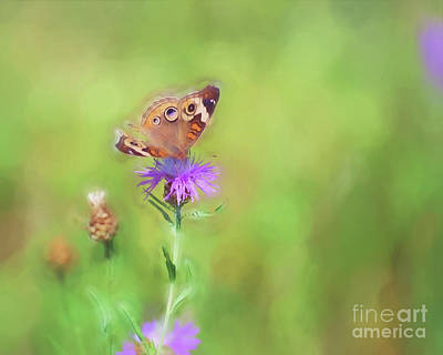 Photograph - Common Buckeye Butterfly - Missing Pieces by Kerri Farley
