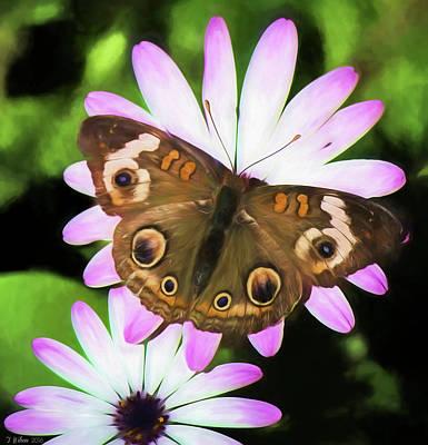 Photograph - Common Buckeye Butterfly On A Daisy by Teresa Wilson