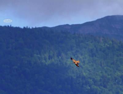 Photograph - Common Buzzard Bird, Geneva, Switzerland by Elenarts - Elena Duvernay photo