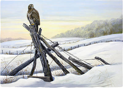 Buzzards Painting - Common Buzzard In Winter Landscape by Dag Peterson