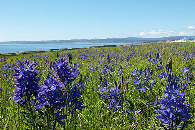 Photograph - Common Camas Meadow With Harbor by Cascade Colors