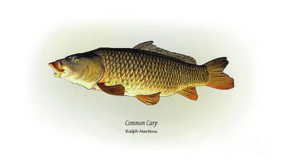 Common Carp Art Print by Ralph Martens