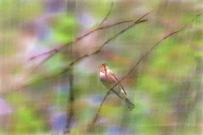 Artistic License Digital Art - Common Chaffinch #2 Artistic by Leif Sohlman