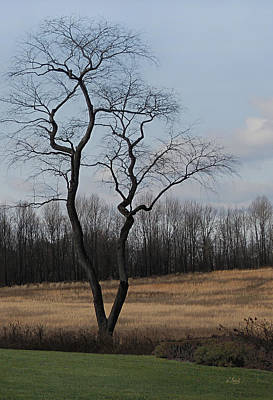 Pennsbury Photograph - Barren Beauty by Gordon Beck