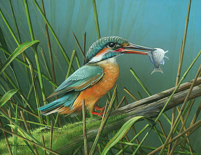 Common Kingfisher Art Print by Mike Brown