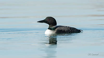 Photograph - Common Loon by CR Courson