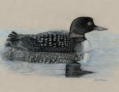 Loon Drawing - Common Loon by Cynthia  Lanka