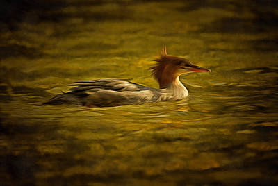 Digital Art - Common Merganser 2 by Mark Kiver