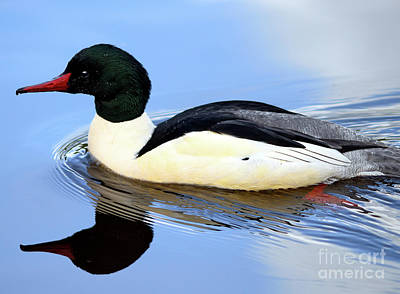 Photograph - Common Merganser Reflection by Terry Elniski