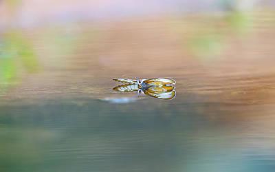 Photograph - Common Mestra by Kathy Adams Clark