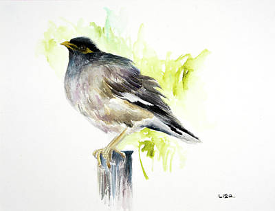 Common Myna Painting - Common Myna by Liza Gonen
