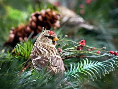 Photograph - Common Redpoll Bird In Bush by Christina Rollo