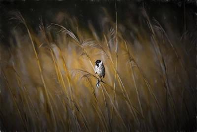 Bunting Digital Art - Common Reed Bunting Nov by Leif Sohlman