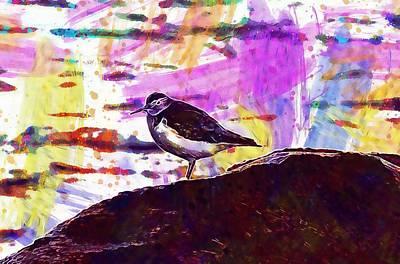 Sandpiper Digital Art - Common Sandpiper Bird  by PixBreak Art