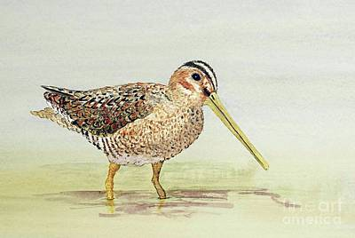 Common Snipe Wading Art Print