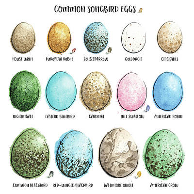 Common Songbird Eggs Painted In Watercolor  Original by Andrea Hill
