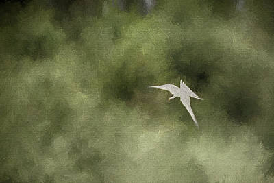 Photograph - Common Tern - Creative by Prashant Meswani