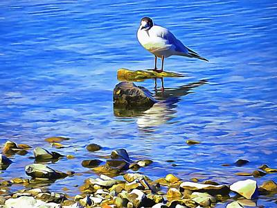 Photograph - Common Tern On Lago Trasimeno Umbria by Dorothy Berry-Lound