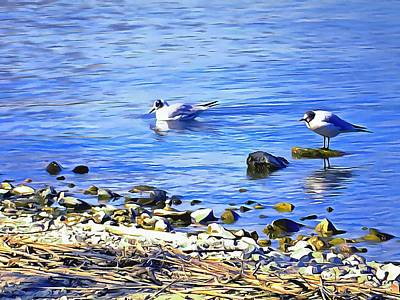 Photograph - Common Terns At The Lakeside by Dorothy Berry-Lound