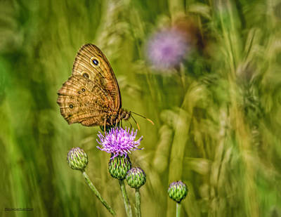 Photograph - Common Wood Nymph On Bull Thistle by LeeAnn McLaneGoetz McLaneGoetzStudioLLCcom