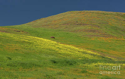 Photograph - Communications Hill's Wildflowers by Glenn Franco Simmons