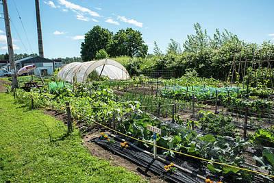 Photograph - Community Garden In Everson by Tom Cochran