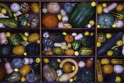 Thanksgiving Art Photograph - Compartments Of Gourds by Garry Gay