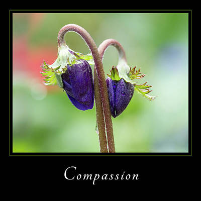 Photograph - Compassion 1 by Mary Jo Allen