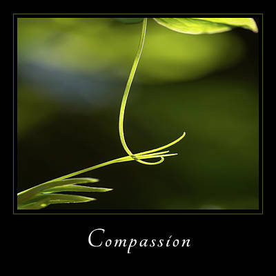 Photograph - Compassion 2 by Mary Jo Allen
