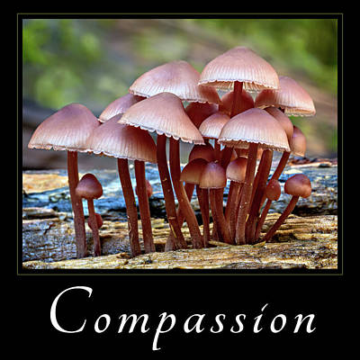 Print featuring the photograph Compassion by Mary Jo Allen