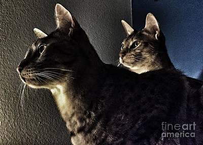 Photograph - Companions by Jenny Revitz Soper