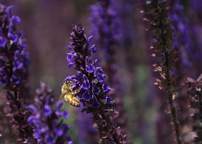 Photograph - Complementary Bee by Stephanie Hollingsworth