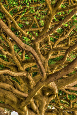 Photograph - Complexed Design 2 Oahu Native Trees Hawaii Collection Art by Reid Callaway