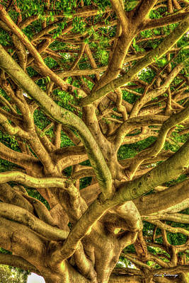 Photograph - Complexed Design 3 Ohau Native Trees Hawaii Collection Art by Reid Callaway