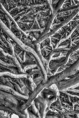 Photograph - Complexed Design B W Oahu Native Trees Hawaii Collection Art by Reid Callaway